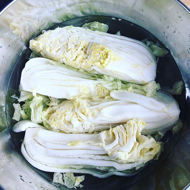 Kimchi ist scharf marinierter fermentiert Kohl oder Rettich oder anderes Gemüse.